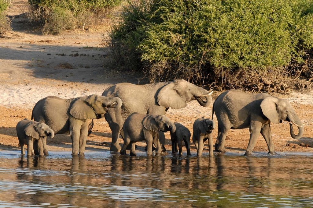 <p class=blog-cap>BOTSWANA // Botswana is the pride of Africa - a country that after its independence in 1966 has enjoyed economic and political stability. With a policy of low impact tourism, this place remains as pristine as it was hundreds of years ago offering luxury cabins and camps giving guests a fabulous experience.</p>