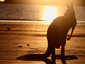 Group Travel Australia