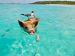 Incentive Trip Exuma, Bahamas