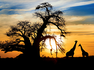 Group Travel Africa