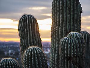 National Sales Meeting Scottsdale Arizona