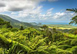 australia-daintree-rainforest